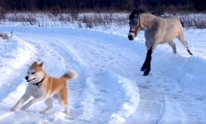 Horse And Dog Are Best Friends Who Loving Playing In Snow