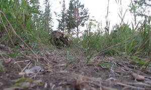 Beaver From an Ants Point of View