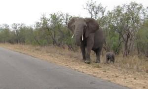 Mama Elephant Redirects Friendly Calf
