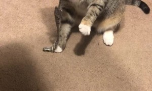 Kitty Briefly Suckles on Binky