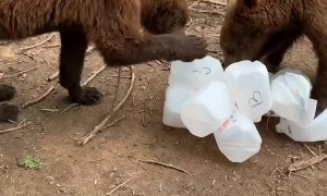 Bears Playing With Recycled Bottles
