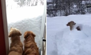 Snow-Swimming Dogs Won't Let Storm Ruin Their Day