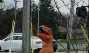 Happy T-Rex Dances at Intersection