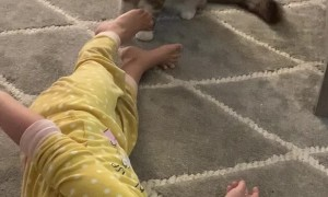 Kitty and Toddler Have a Blast Together