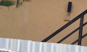 Snake Lunges at Gecko Scaling Building Wall