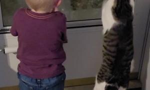 Kiddo and Cat Grab at Glass