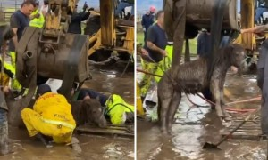Horse And Pony Rescued After Getting Trapped In Deep Mud