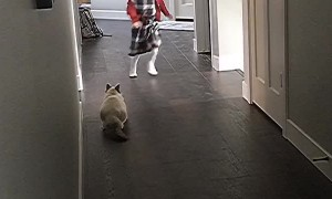Kitty Plays Game of Tag with Girl