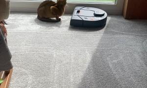 Robot Vacuum Cleans Around Cat