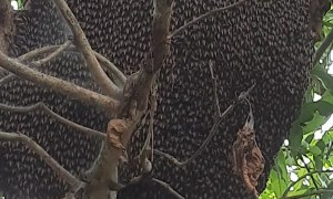 Beautiful Bee Hive Behavior