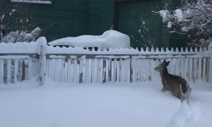 Twin Fawns Frolic Through Thick Snow