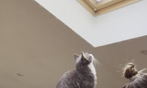 Ninja Cat's Plans Foiled by Window