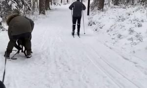 Dog Sled Walk Has a Rough Start