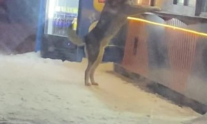 Smart Doggy Drops by Food Store for a Feed