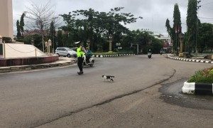 Police Officer Helps Kitty Cross the Street