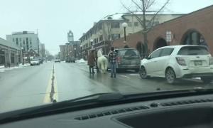 Llama Hops into Van