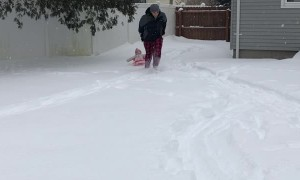 Baby Sled Ride Ends in a Bang