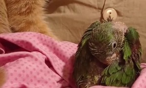 Rescued Kitty and Parrot Play Together