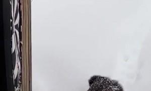 Kitty Struggles to Walk Through Thick Snow