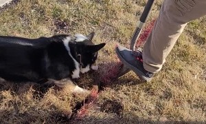 Doggy Does Some Digging