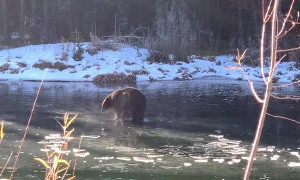 Big Bear Finds Itself on Thin Ice