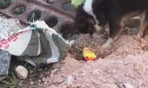Pup Hides Plastic Toy