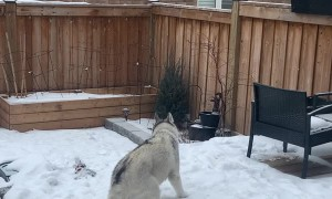 Doggy Spins Excitedly in the Snow