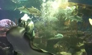 Diver Feeds a Hungry Stingray