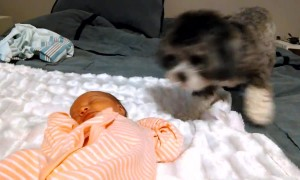 Puppy's Adorably Precious Reaction To Meeting Newborn Baby