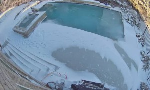 Little Girl Saves 90 Pound Lab from Icy Pool