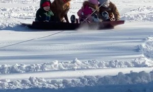 Dog Joins Family for Sledding Fun