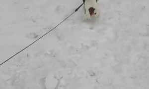 Sprinting Pup Pulls Snowboarder