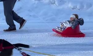 Yogi the Beagle Pulls Paralyzed Best Friend Around in a Sled