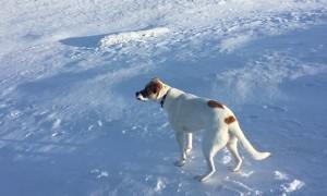 Doggo Rolls Down Snowy Hill