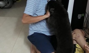 Puppy Protects Boy From Pretending Father