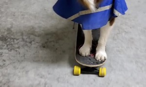 Dog with Neurological Disorder Balances Cup on Nose While Pushing Skateboard