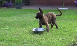 Confused Puppy's First Experience With Water Bowl Is Adorable