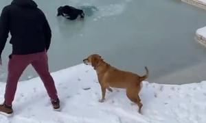 Moonwalk on Frozen Pool Fail