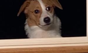 Dog Waits Outside for Dinner