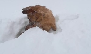 Happy Dog Tunnels Through Snow