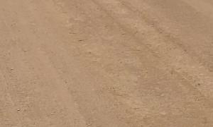 Wild Dingo Pack Wanders Across Strzelecki Track