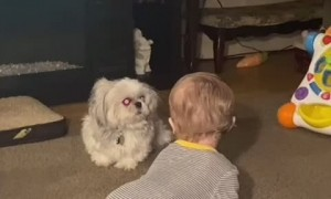 Grandson Loves Playing with Pup