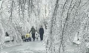 Frozen Trees Create Winter Wonderland