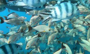 Diving with a School of Fish