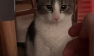 Comb Make Cat Weird