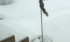 Squirrel Slides Down Bird Feeder Trying to Steal Food