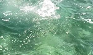 Hammerhead Shark on the Hunt