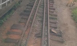 Horse Holds Up Train on Bridge