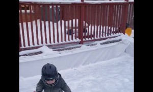 Toddler Practicing His Hockey Goals