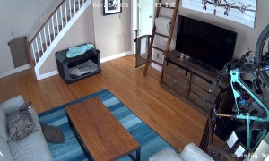 Excited Puppy Zooms through the House
